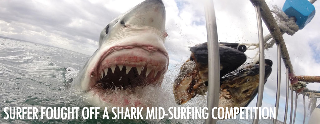 Surfer fought off a shark mid-surfing competition